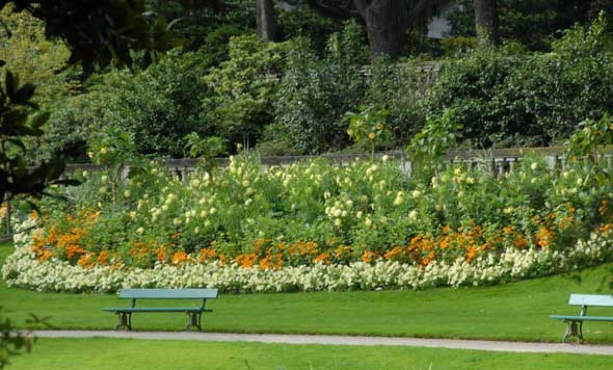 Jardin des plantes for Plantes fleuries jardin